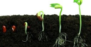 germination-of-a-seed